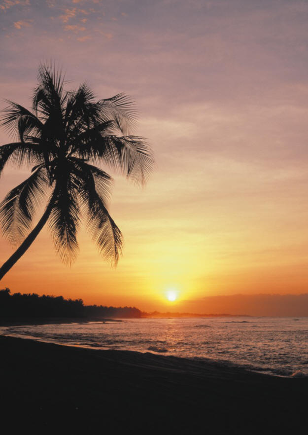 Sunset Palm Wall Mural