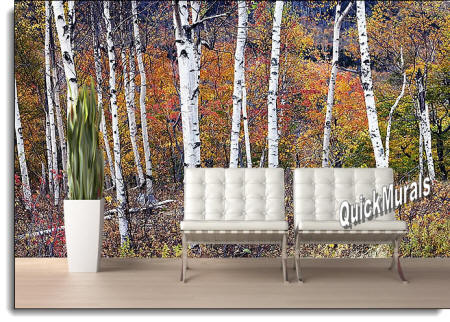 Birch Forest Wall Mural ROOMSETTING
