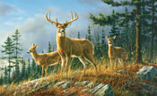 Autumn Whitetails Wall Mural