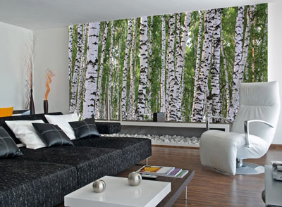 Birches Wall Mural C865 roomsetting