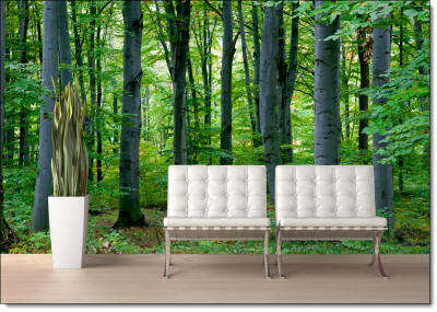 woodland forest wall mural roomsetting